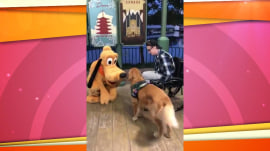 Watch this service dog come nose-to-nose with Pluto at Disney World