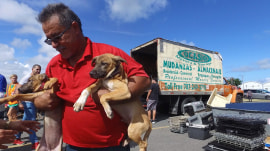 Animals impacted by Hurricane Maria  hope to find new homes in the US