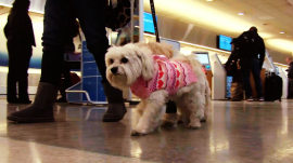 New Delta pet policy has fur flying among passengers and animal lovers