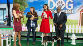 Adopt a Doggie TODAY: These adorable pups need homes