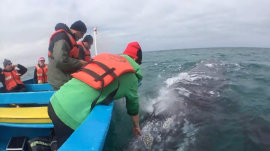Watch this whale spray a group of watchers right in the face