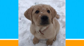 Watch TODAY puppy Sunny see snow for the first time