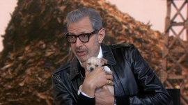 Jeff Goldblum talks about his new movie, 'Isle of Dogs'
