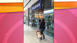Watch this mischievous guide dog lead woman toward treats