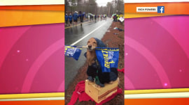 Watch this therapy dog cheer on Boston Marathon runners