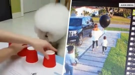 Highs and Lows: Dog beats cup trick, gender reveal fail