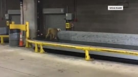 Monkey escapes from crate at San Antonio airport
