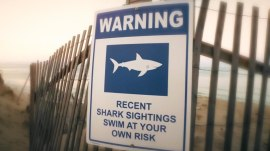 Cape Cod vacationers on edge amid shark sightings at beaches
