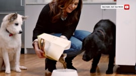 Rachael Ray's Nutrish 'natural' dog food is 'potentially harmful,' lawsuit says