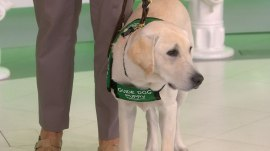 Take a look at the documentary 'Pick of the Litter,' which follows guide dog trainers