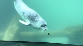 This seal encountering a beautiful butterfly is the sweetest thing you'll see today