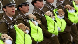 We can't take our eyes off of this puppy parade!
