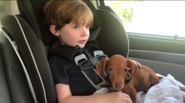 Boy has the sweetest reaction to meeting newly adopted puppy