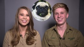 Bindi and Robert Irwin: our family pug is 'one of the sweetest animals' we know