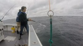 See Stephanie Gosk go deep-sea fishing with 'Wicked Tuna' stars