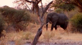 National Geographic filmmakers get up close with Botswana wildlife