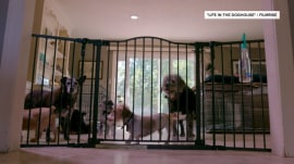 Meet the pair who saved 11,000 dogs by turning their home into a shelter