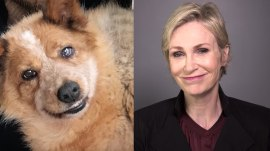 Jane Lynch's recovering rescue dog is an Instagram star