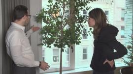 Expert helps Savannah save her ficus tree
