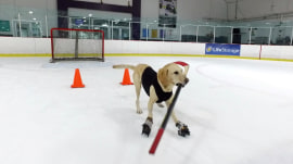 Meet Benny, the world's 1st ice skating dog