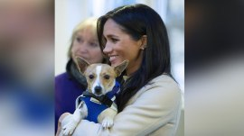 Meghan Markle spends time with puppies in visit to animal charity
