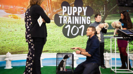 How to train your puppy: Expert trainer shares tips