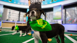 Puppy Bowl XV preview: See adorable pups up for adoption