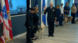 Sully the service dogs takes on new job after Bush's death