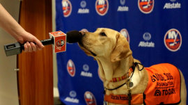 TODAY's puppy, Sunny, will be 'Stanley Pup' correspondent for Stanley Cup playoffs