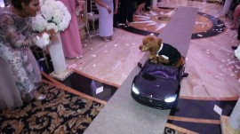 Dog in tiny toy car serves as couple's wedding ring bearer