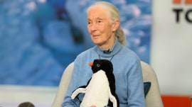 Jane Goodall talks about 'Penguins' film