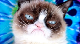 Grumpy Cat, the internet's favorite grouch, dies at age 7