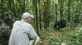 Harry Smith journeys to Africa to see one of the world's largest primates