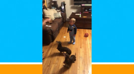 Mom training her dogs winds up training her toddler, too