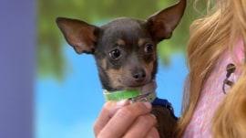 Pet palooza! Beth Stern kicks off TODAY's adoption series