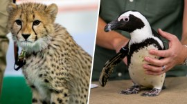 See endangered animals from Turtle Back Zoo in New Jersey