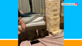 Watch: Puppy proves to be an expert Jenga player