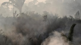 Amazon wildfires trigger global pleas for protection