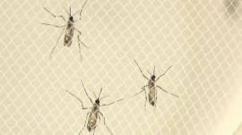WHO to hold emergency meeting as Zika virus spreads