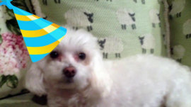 Happy 6th birthday to KLG's dog Bambino!
