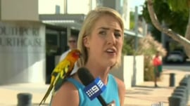 Watch friendly bird surprise a horrified Australian reporter
