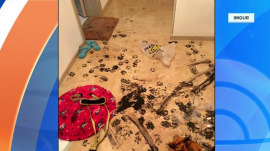 Photos: Dog destroys family home after stepping in calligraphy ink set