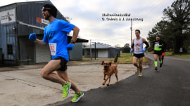 Smells like victory! Bloodhound joins half-marathon, finishes 7th