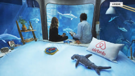 Sleep with the fishes, er.. sharks, in this unusual Airbnb listing