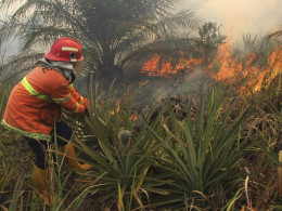Image: A firefighter tries to put out a fire, which burned a plantation, in Rokan Hilir district in Riau province