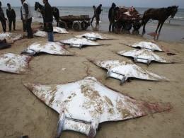 Image: TOPSHOTS-PALESTINIAN-GAZA-FISH