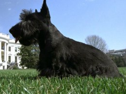 George W. Bush's Dog