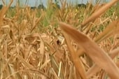 Intense droughts hurt southern states