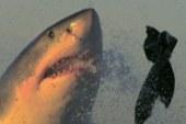 Shark Week returns to TV
