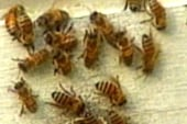 Four men recovering from dozens of bee stings